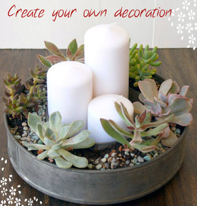 Example of planted Succulents To create nice decoration.