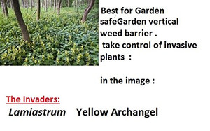 How to prevent stop  yellow Archangel /  Lamiastrum  spreading in the garden