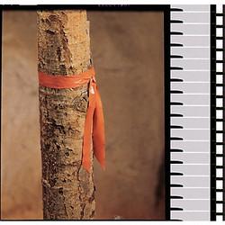 Presco Products Co Taffeta Flagging Tape,Orange,300ft x 1In  TF1O-200