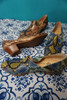 12prs Womens KATY PERRY Snake Print Shoes ~ 2 Colors #24243L (L-4-5)