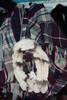 24pc Ponchos / Wraps & REAL FUR! CK Landau STEVE MADDEN Camuto #24693u  (X-7-3)