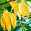 Sleep spray ylang ylang