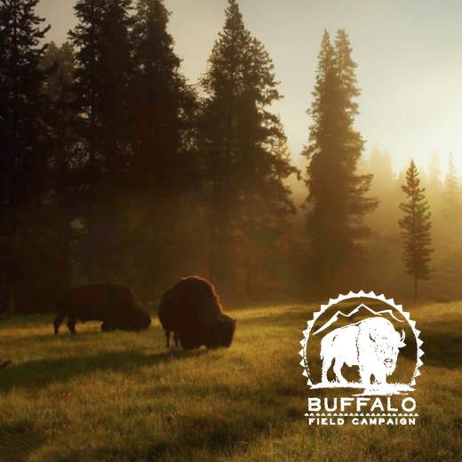 Giving Spotlight: Buffalo Field Campaign