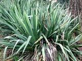 yucca-paint-brushes-compact.jpg