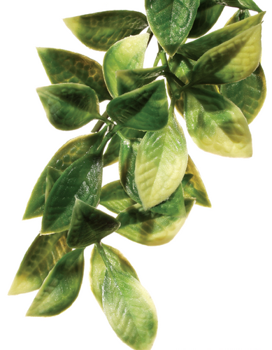 Exo Terra Forest Plant - Mandarin - Medium (PT3012)