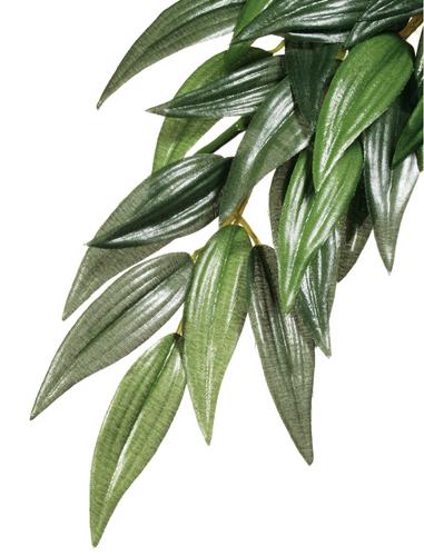 Exo Terra Forest Plant - Ruscus - Medium (PT3041)