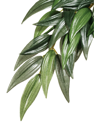 Exo Terra Forest Plant - Ruscus - Small (PT3031)