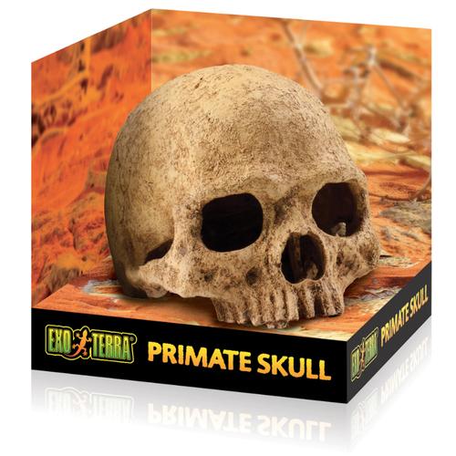 Exo Terra Primate Skull - Large (PT2855)