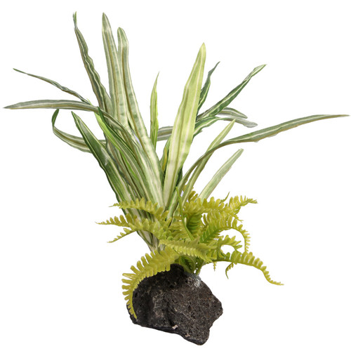 Reptile One Lilyturf And Bracken With Pumice Base (46779)