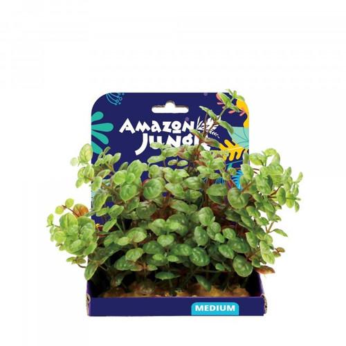Amazon Jungle Ludwigia Display 15cm
