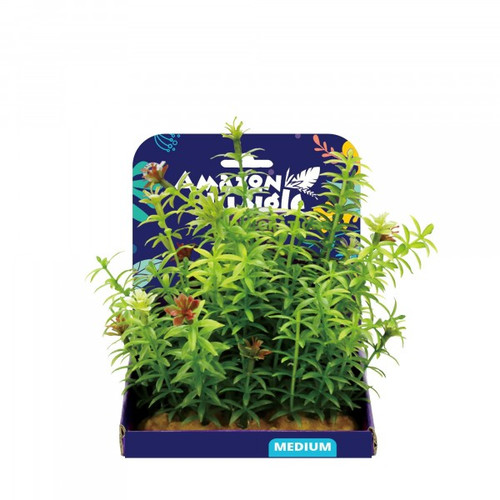 Amazon Jungle Anacharis Display 15cm