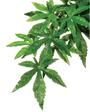 Exo Terra Forest Plant - Abutilon - Small (PT3032)