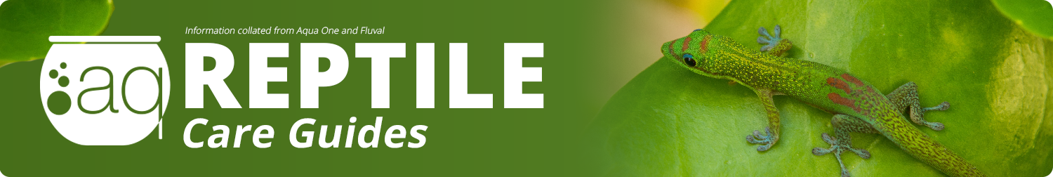 reptile-care-guide-banner.png