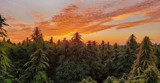 Harvest is Upon Us! Top 4 States Leading in Hemp Production