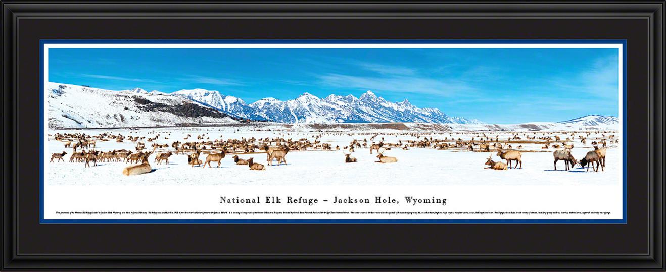 National Elk Refuge - Jackson Hole Panoramic Picture, Wyoming