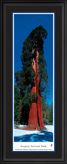 Sequoia National Park Panoramic Picture - Vertical Panoramic Picture