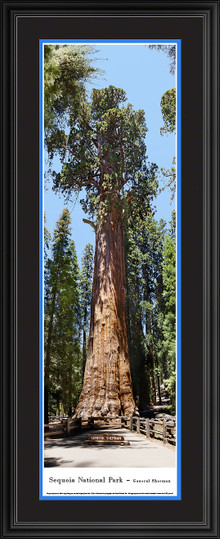 Sequoia National Park Panoramic Picture - Vertical Panorama