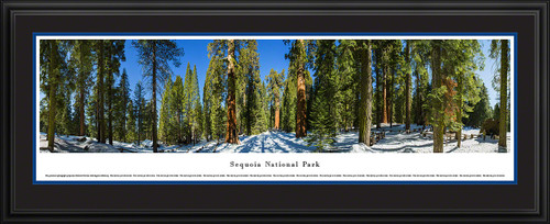 Sequoia National Park Panoramic Picture