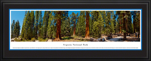 Sequoia National Park Panoramic Picture - Landscape Wall Decor