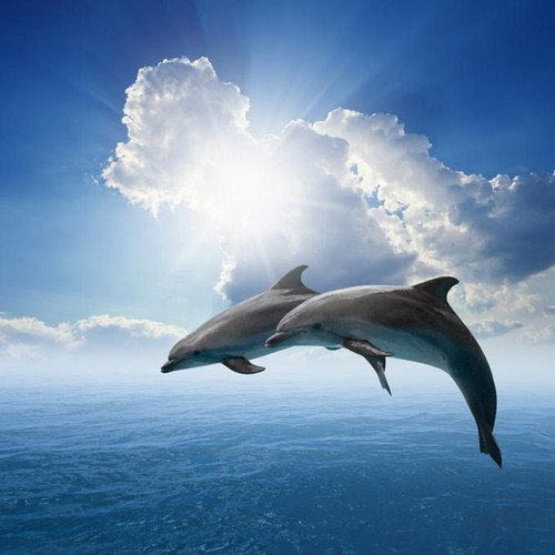 5D Diamond Painting Two Dolphins Clouds Kit