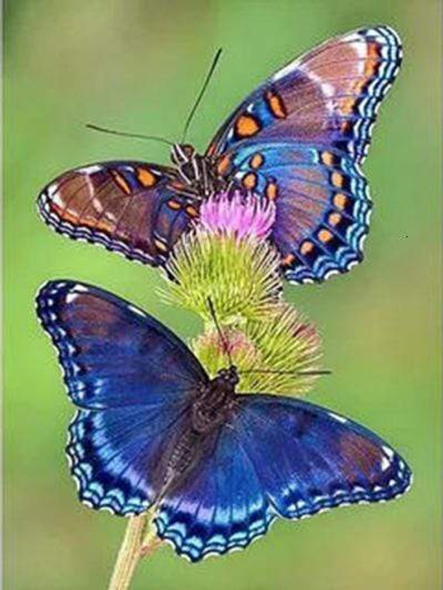 5D Diamond Painting Two Butterflies on a Flower Kit
