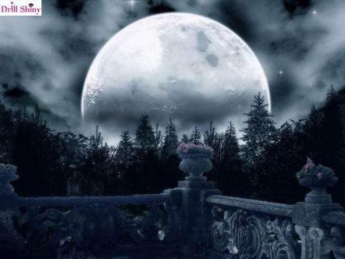 5D Diamond Painting Grey Moon Forest Kit