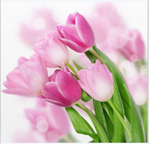 5D Diamond Painting Shades of Pink Tulips Kit