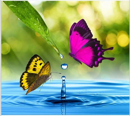5D Diamond Painting Two Butterfly Water Drop Kit