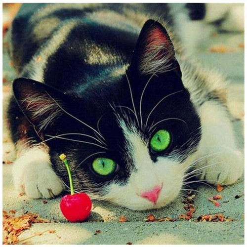 5D Diamond Painting Cat and a Cherry Kit