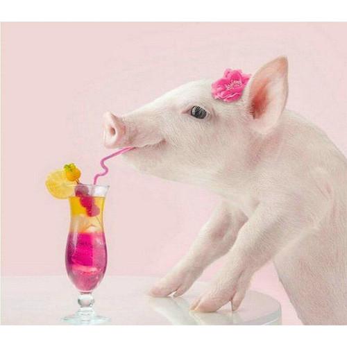 5D Diamond Painting Pink Cocktail Pig Kit