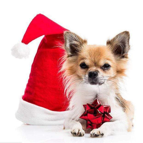 5D Diamond Painting Red Bow Chihuahua Kit