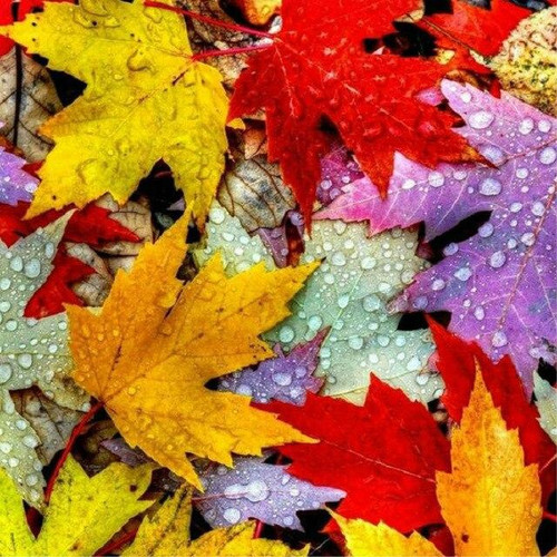 5D Diamond Painting Colorful Fall Leaves Kit