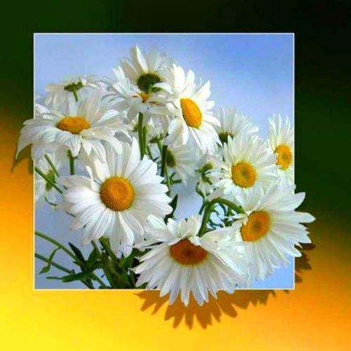 5D Diamond Painting Pop Out Daisies Kit