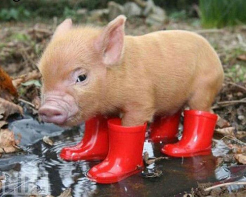 5D Dianond Painting Piglet in Red Boots Kit