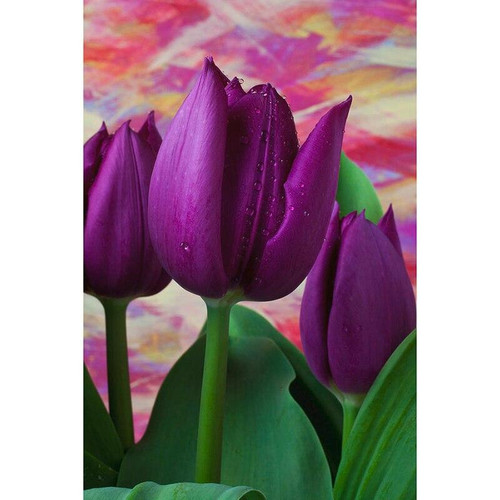 5D Diamond Painting Big Purple Tulip Kit