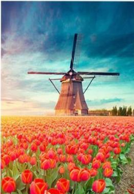 5D Diamond Painting Red Tulips by the Windmill Kit