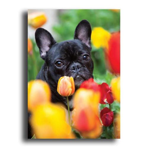 5D Diamond Painting Tulip Black Pug Kit