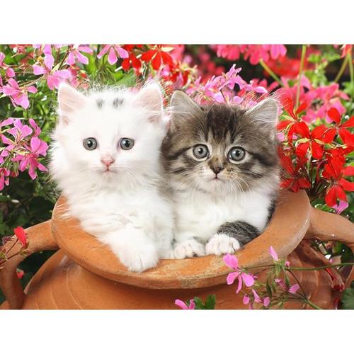 5D Diamond Painting Two Kitten Pot Kit