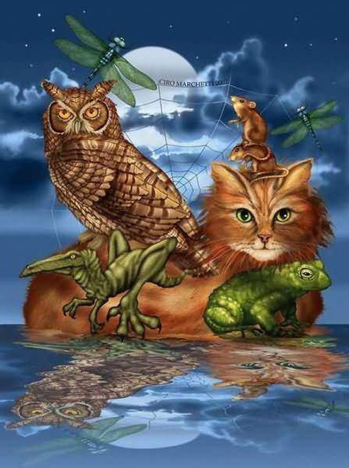 5D Diamond Painting Abstract Cat and Owl Kit