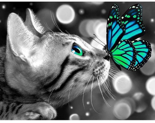 5D Diamond Painting Cat and Blue with Green Wing Butterfly Kit
