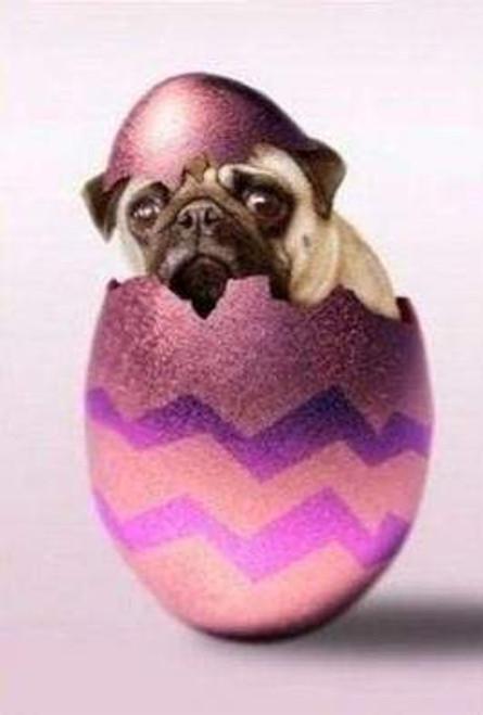 5D Diamond Painting Pink Egg Pug Kit