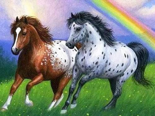 5D Diamond Painting Two Horse Rainbow Kit