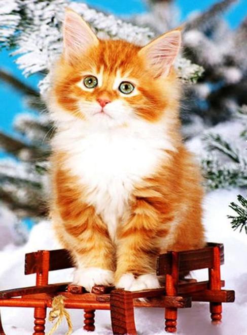5D Diamond Painting Striped Kitten in the Snow Kit