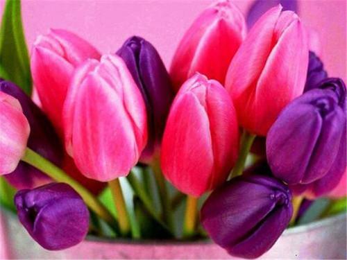5D Diamond Painting Pink and Purple Tulips Kit