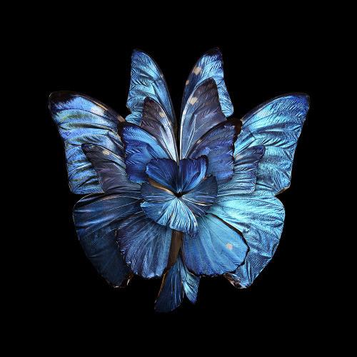 5D Diamond Painting Butterfly Flower Kit