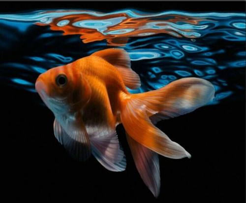 5D Diamond Painting Dark Water Goldfish Kit