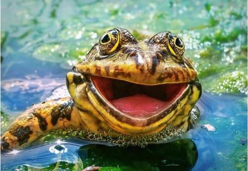 5D Diamond Painting Big Frog Smile Kit