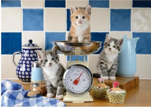 5D Diamond Painting Kitchen Kittens Kit