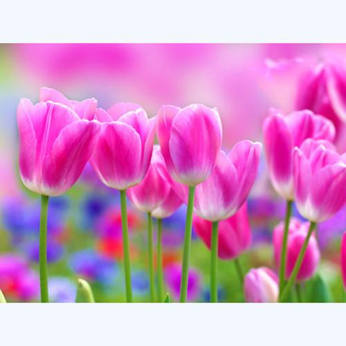 5D Diamond Painting Row of Pink Tulips Kit