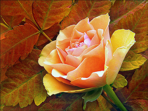 5D Diamond Painting Rose on Leaves Kit